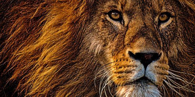 Gir Forest Safari Booking