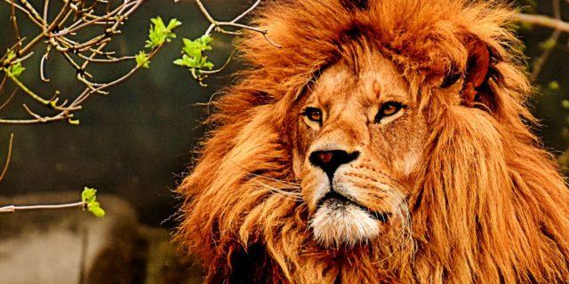 Gir Lion National Park