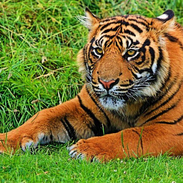 Tiger Safari Holidays