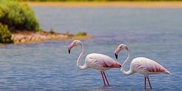 Ghana Vogelschutzgebiet