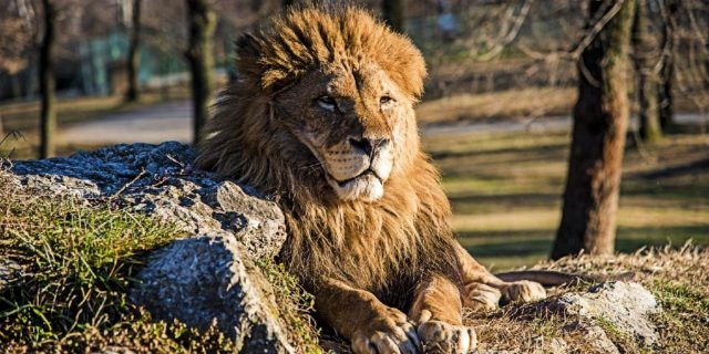 Gir National Park is Famous For