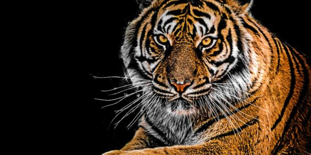 Kanha National Park is Famous for