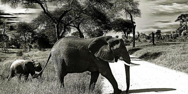 Panna National Park Safari