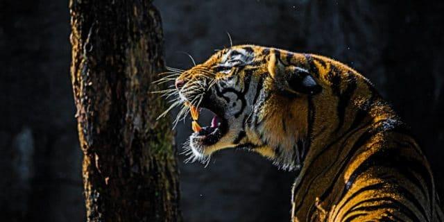 Panna Tiger Reserve Buchung