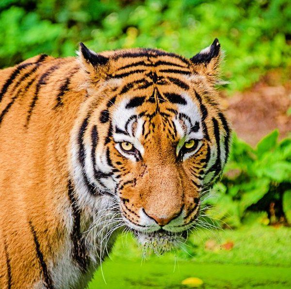 Pench Turia Gate Safari Buchung