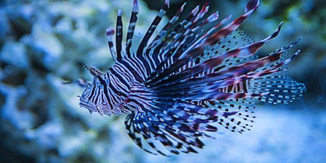 Scuba Diving in Andaman Cost