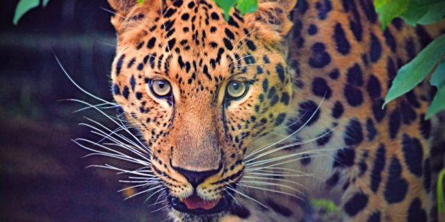 Buchung von Wildlife Safari