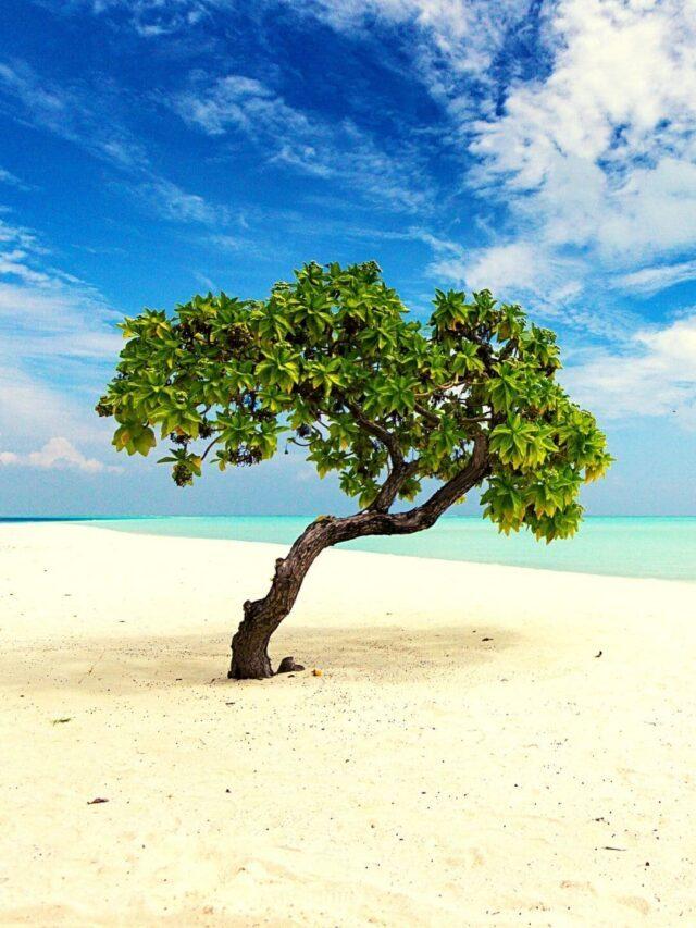 Top 10 Tips on Andaman Beach Vacation