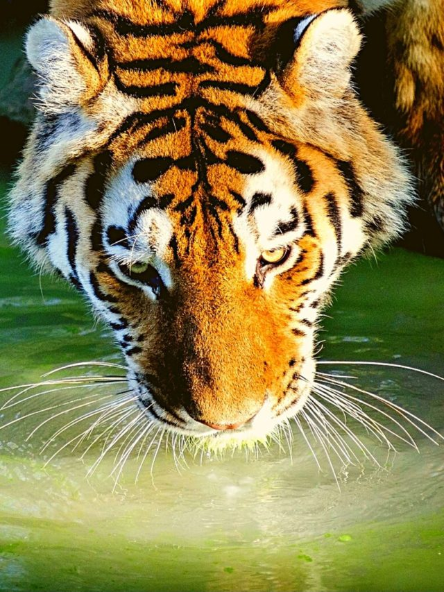 The BEST Tiger Reserves of South India
