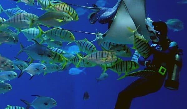 Lakshadweep Scuba Diving