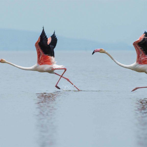 Keoladeo Vogelschutzgebiet