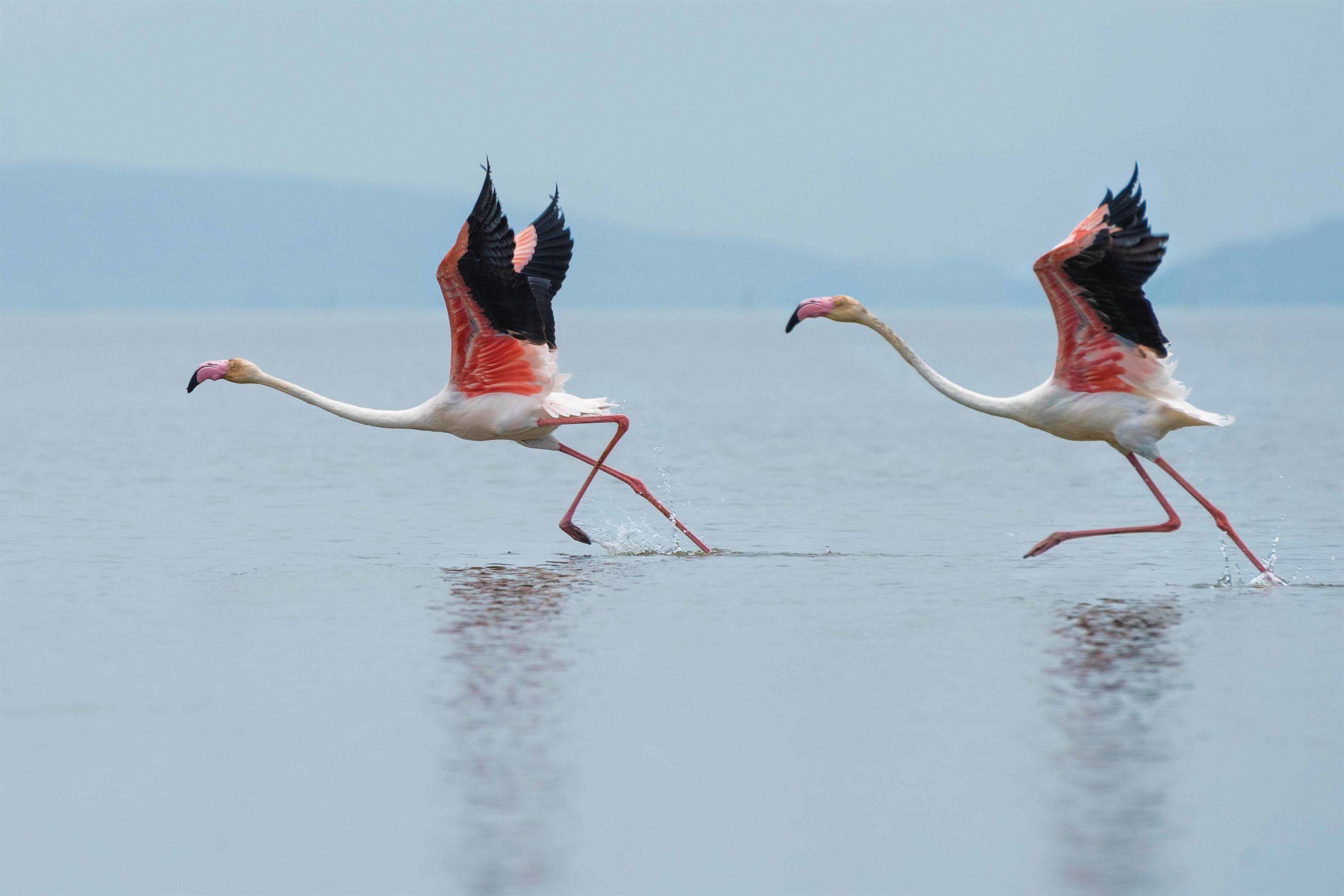 Keoladeo Nationalpark Indien
