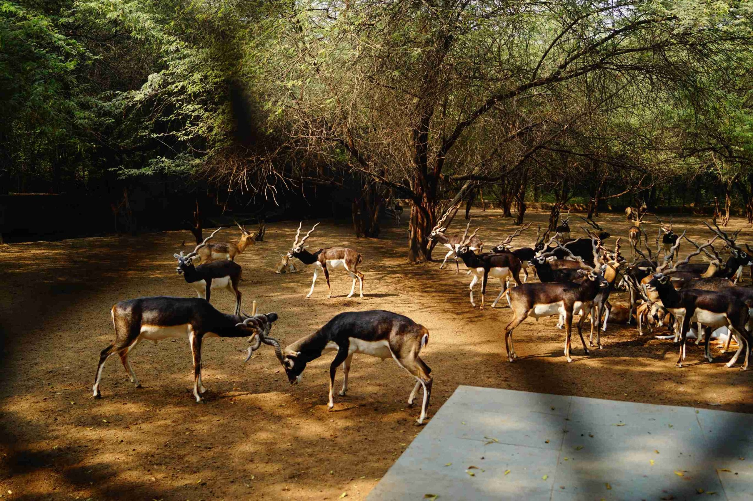 Pench National Park Indien